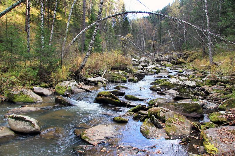 金黄秋天在阿尔泰地区在俄罗斯 美好的风景-路在秋天森林里 库存照片