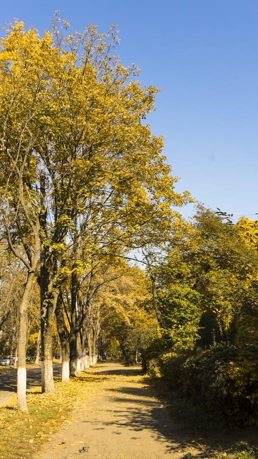 金黄秋天场面在一个公园,当叶子、太阳发光通过树的和天空蔚蓝 秋天报道的划分为的森林地面横向留下黄色 室外秋天co 图库摄影