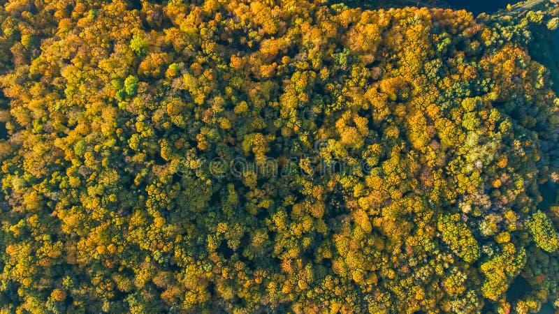 金黄秋天背景,美好的森林风景空中寄生虫视图与黄色树的从上面 免版税库存照片
