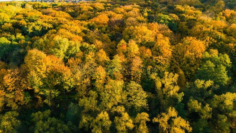 金黄秋天背景,美好的森林风景空中寄生虫视图与黄色树的从上面 免版税库存图片