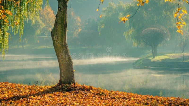 金黄秋天 与落叶的孤立光秃的树在以轻的早晨薄雾为背景的海岸在的水 免版税库存图片