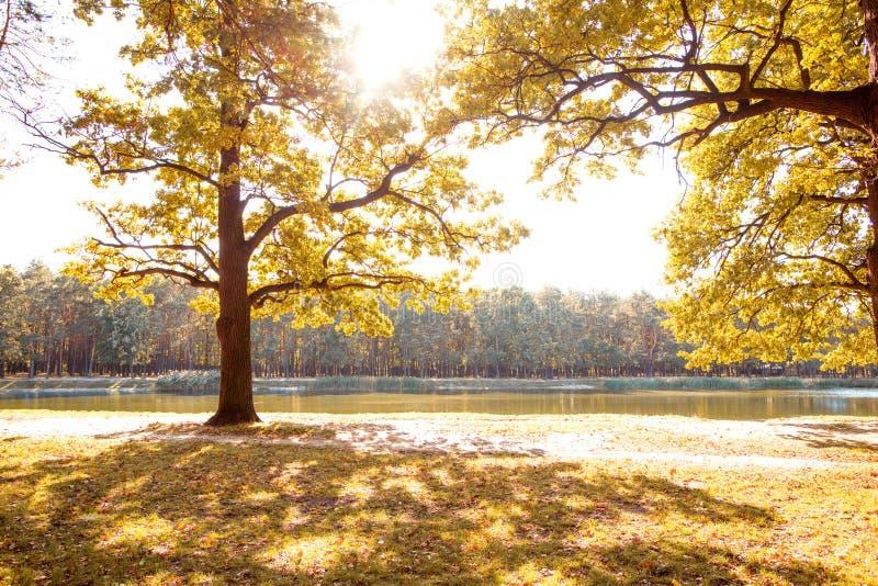 金黄秋天 反对湖的背景的秋天森林 库存图片