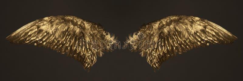 金黄翼 库存图片