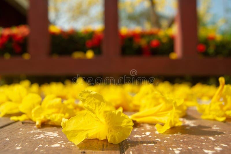 金黄花在地面上落 库存照片