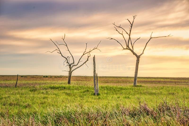 金黄草甸,路易斯安那 免版税图库摄影