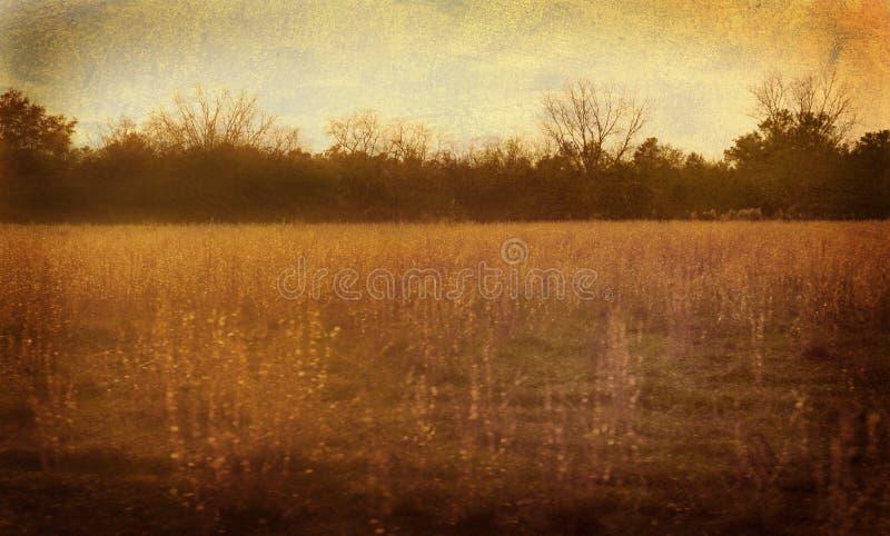 金黄草甸 库存图片