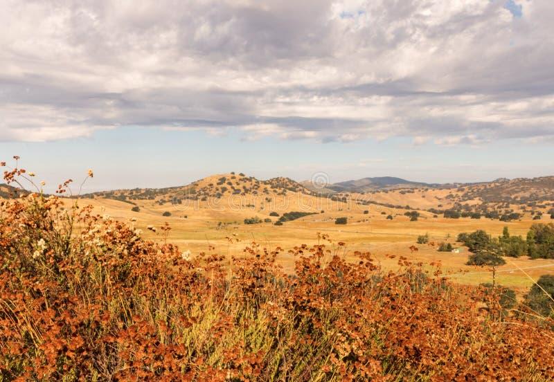 金黄领域,荞麦,橡木,雷雨云 免版税库存图片