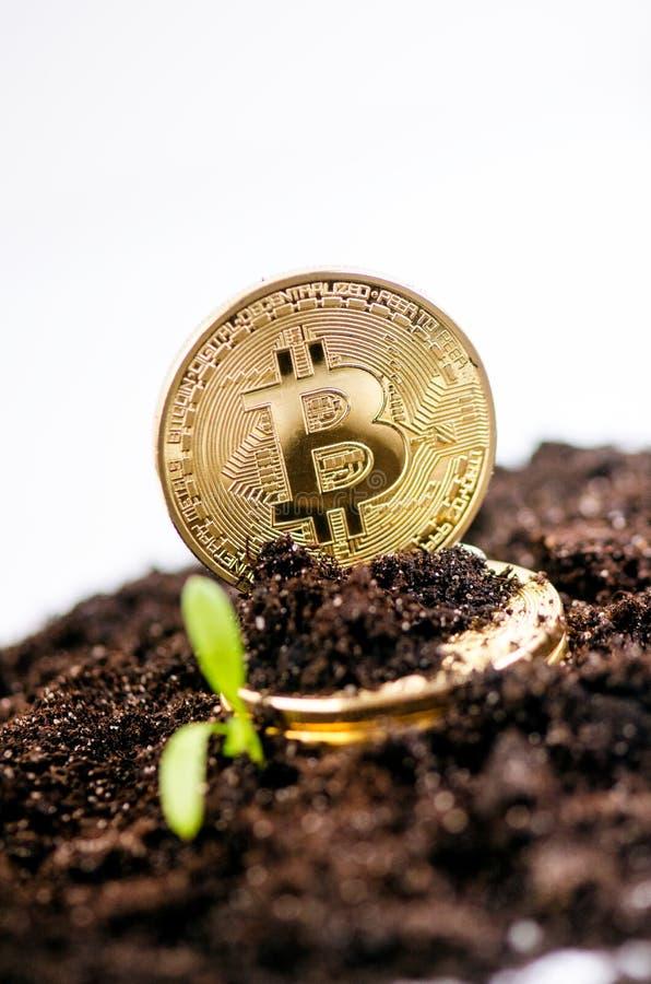 金黄bitcoin在土壤和生长植物铸造 真正货币 隐藏货币 新的真正金钱 免版税库存照片