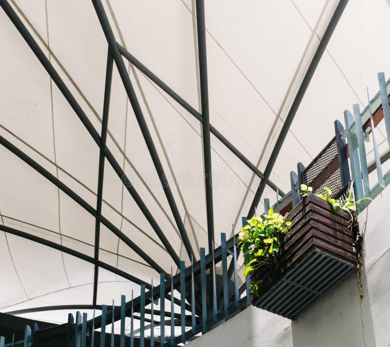 金黄Pothos或恶魔在垂悬的木篮子装饰的` s常春藤 免版税图库摄影