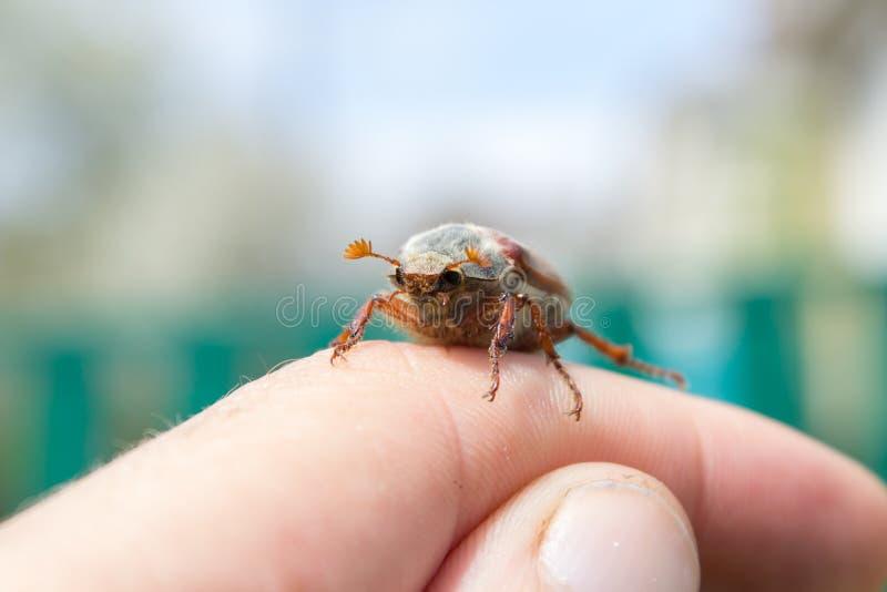 金龟子在手边 免版税库存图片