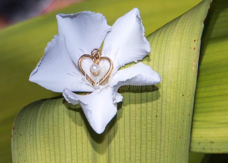 金黄心脏白花绿色叶子背景 库存照片