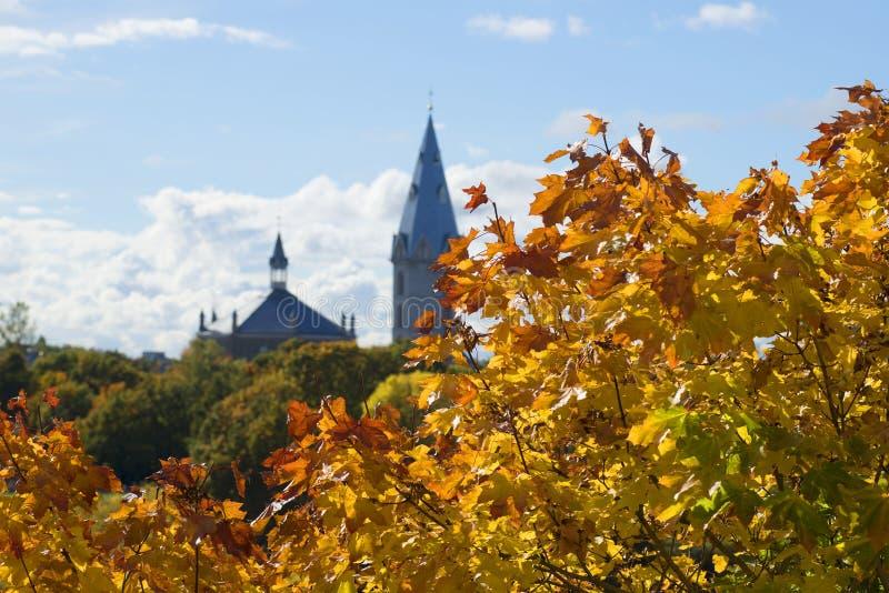 金黄槭树在背景留下亚历山大信义会的塔 爱沙尼亚 免版税库存图片