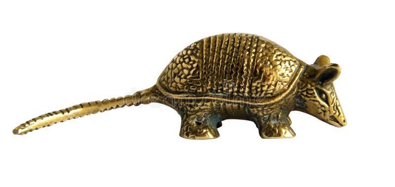 金黄犰狳 免版税库存照片