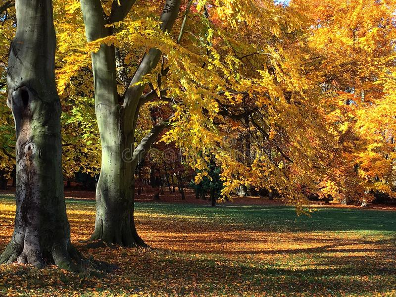 金黄的秋天 库存照片