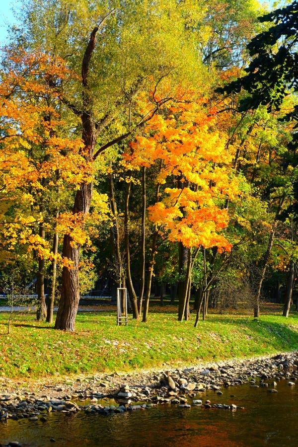 金黄秋天树和河 库存图片