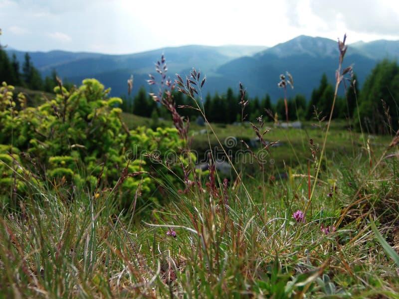 金黄秸杆和植物和山在后面 免版税库存照片