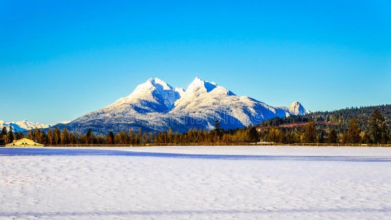金黄耳朵山的积雪的峰顶在不列颠哥伦比亚省,加拿大费沙尔谷的  免版税库存照片