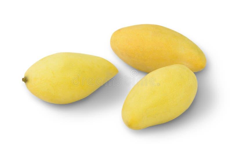 金黄芒果在泰国 库存图片