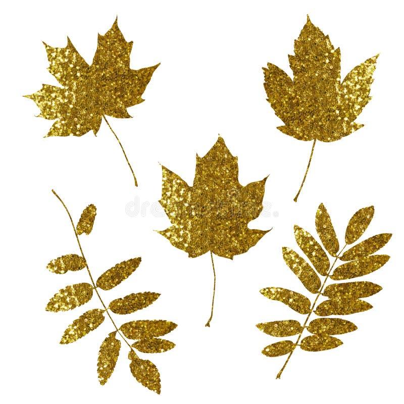 金黄闪烁槭树和花揪叶子 图库摄影