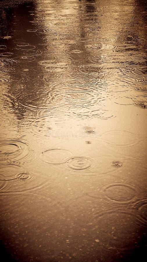 金黄阵雨 库存图片