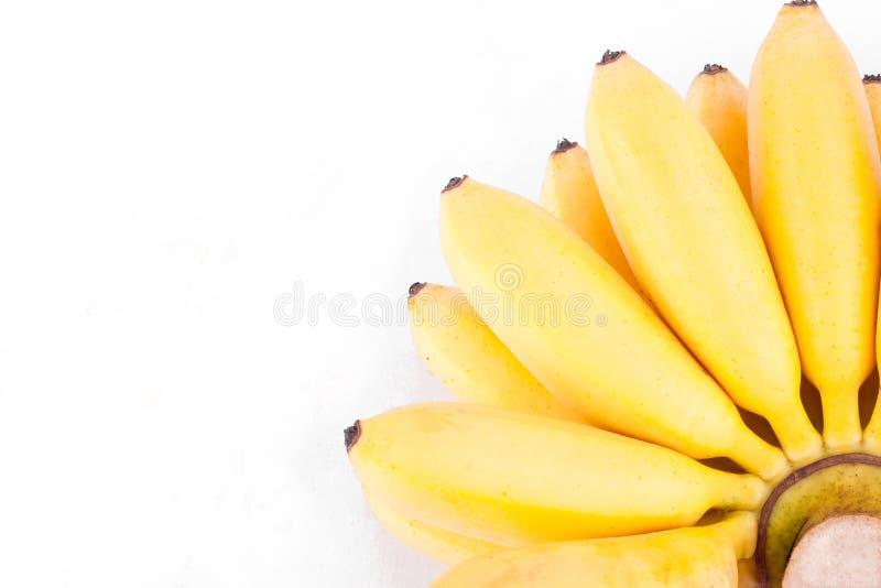 金黄香蕉或蛋香蕉是在白色被隔绝的背景健康Pisang Mas香蕉果子食物的芭蕉科家庭 库存照片
