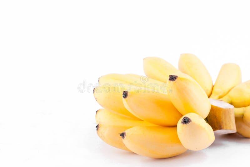 金黄香蕉或蛋香蕉是在白色被隔绝的背景健康Pisang Mas香蕉果子食物的芭蕉科家庭 免版税库存照片