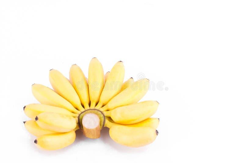 金黄香蕉或Finger夫人香蕉的成熟手在白色被隔绝的背景健康Pisang Mas香蕉果子食物 库存照片