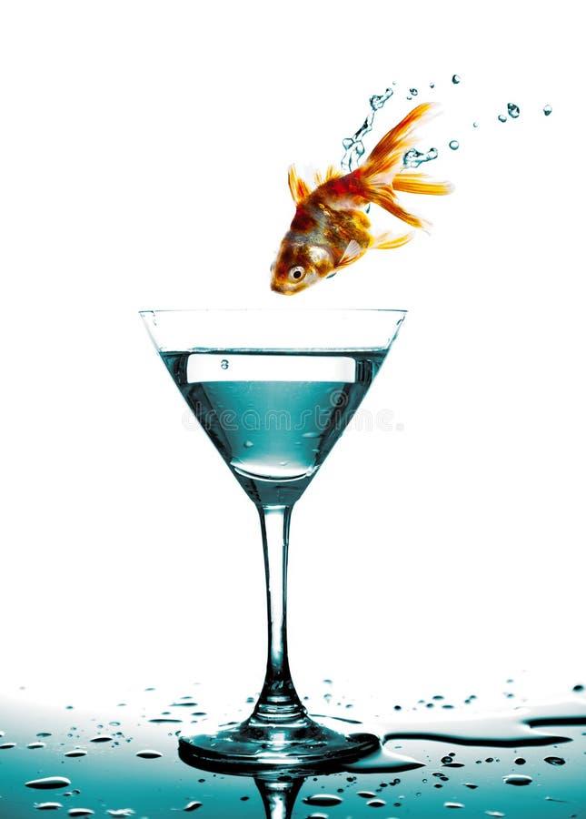 金黄鱼跃迁对马蒂尼鸡尾酒玻璃的 库存照片