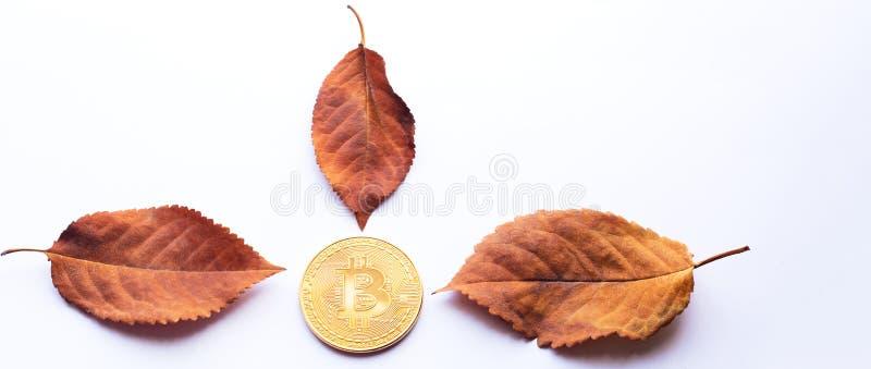金bitcoin和秋叶与拷贝空间文本的 库存图片