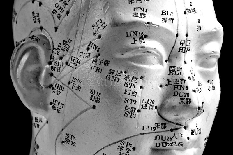 针灸顶头模型 库存图片