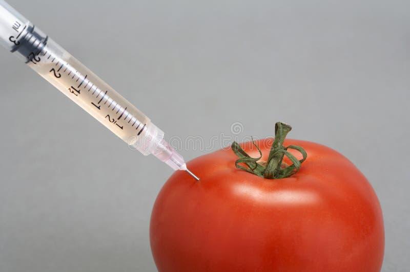 针蕃茄 库存图片