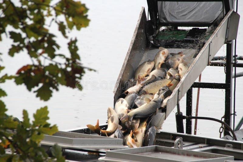 钓鱼在池塘外面在Trebonsko,捷克共和国 ?? 免版税库存图片