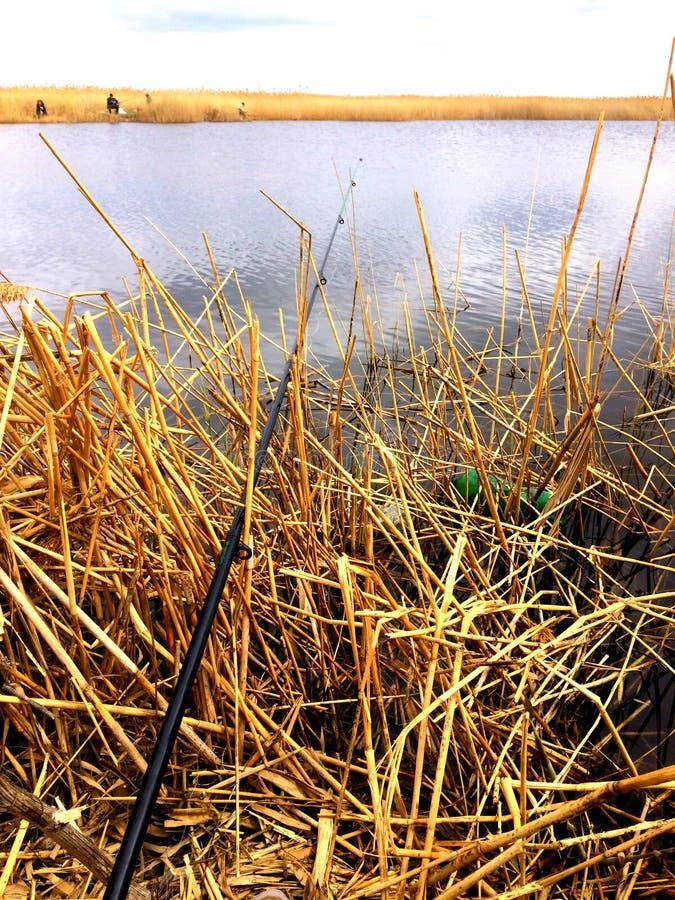 钓鱼在河岸 库存图片
