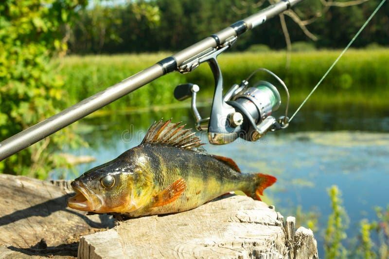 钓鱼在转动 实心挑料铁杆的风行在河 在勾子的一个栖息处 与转动的体育 在附近放松水 库存照片