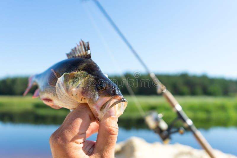 钓鱼在转动 实心挑料铁杆的风行在河 免版税库存照片