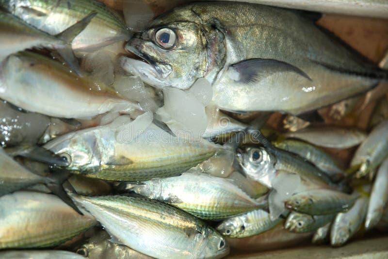 钓鱼新鲜市场 库存照片