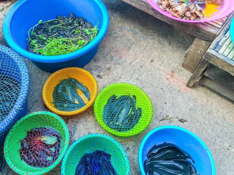 钓鱼新鲜市场 图库摄影