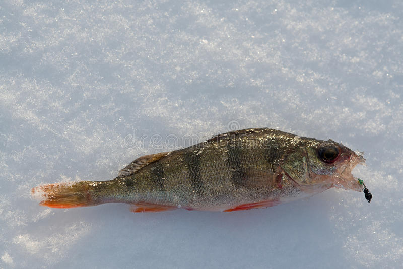 钓鱼栖息处的冬天 免版税库存照片