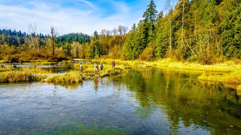 钓鱼梯级河的产卵范围顺流拉斯金水坝的在使命附近的Hayward湖,BC,加拿大 库存照片