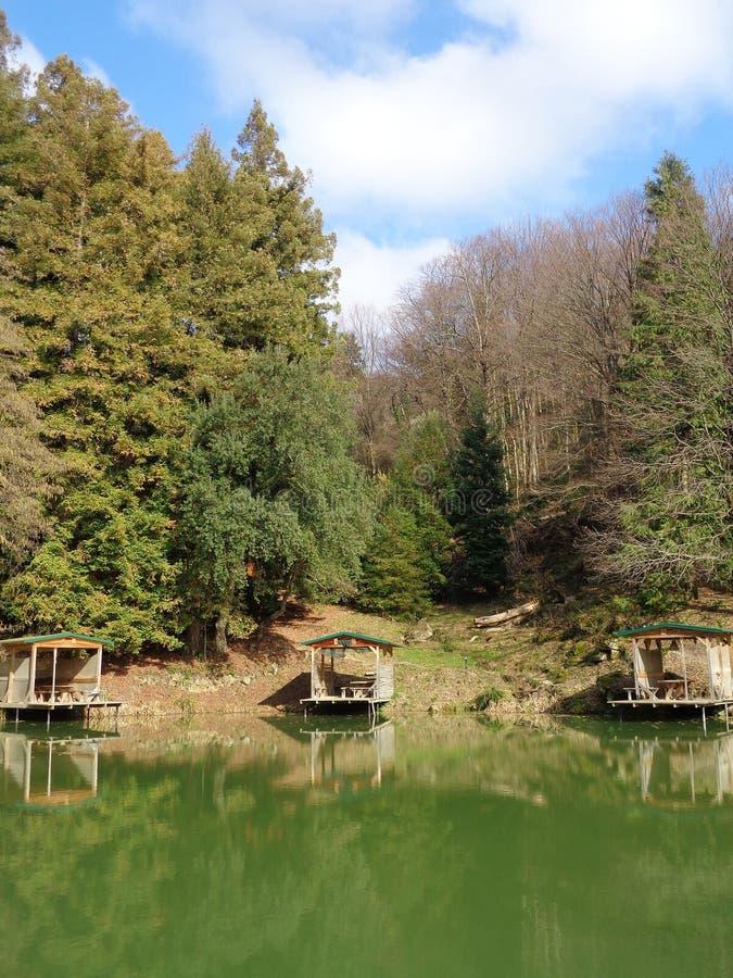 钓鱼的地方湖的在森林里,高加索自然保护 免版税库存照片
