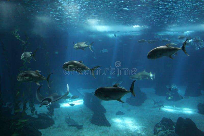 钓鱼里斯本oceanarium 免版税库存照片