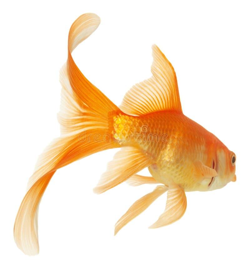 钓鱼金子 图库摄影