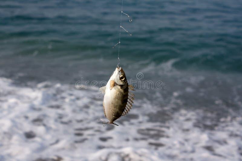 钓鱼钩 免版税库存照片