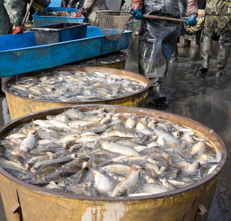 钓鱼  免版税图库摄影