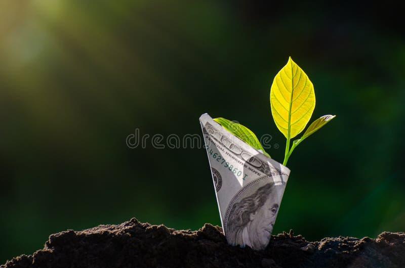 钞票钞票的树图象与生长在节约金钱企业绿色的自然本底和投资fina的上面的植物的 库存照片