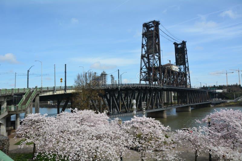 钢桥梁和樱花在波特兰,俄勒冈 免版税库存图片