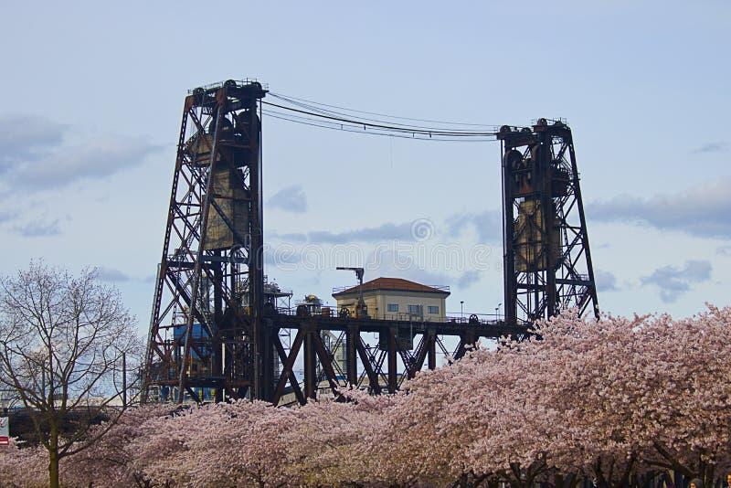 钢桥梁和樱花 库存图片