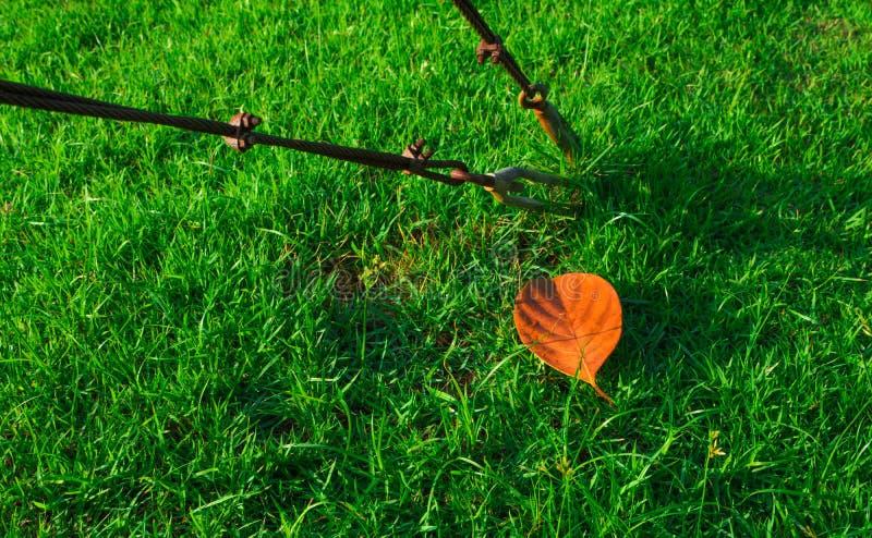 钢绳绳索在绿草的吊索夹子 库存照片