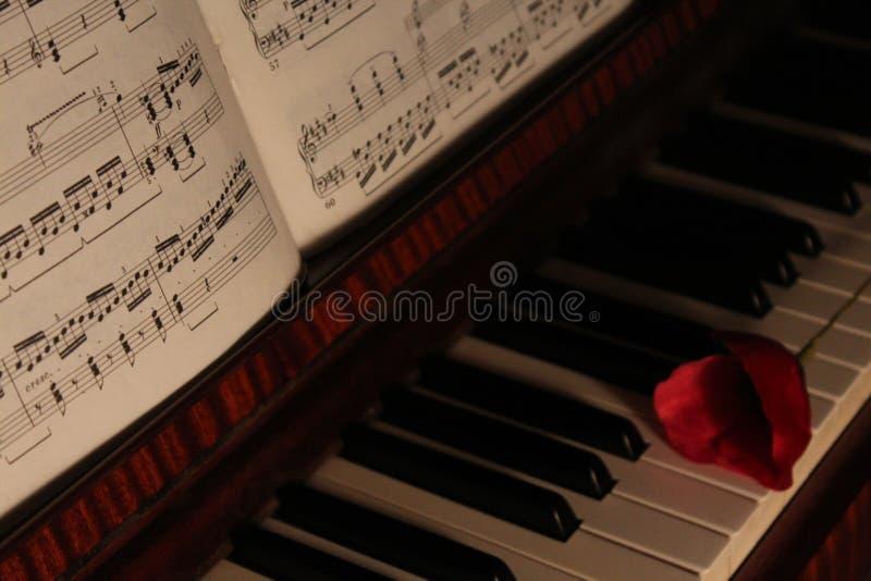 钢琴、红色花和活页乐谱 库存图片