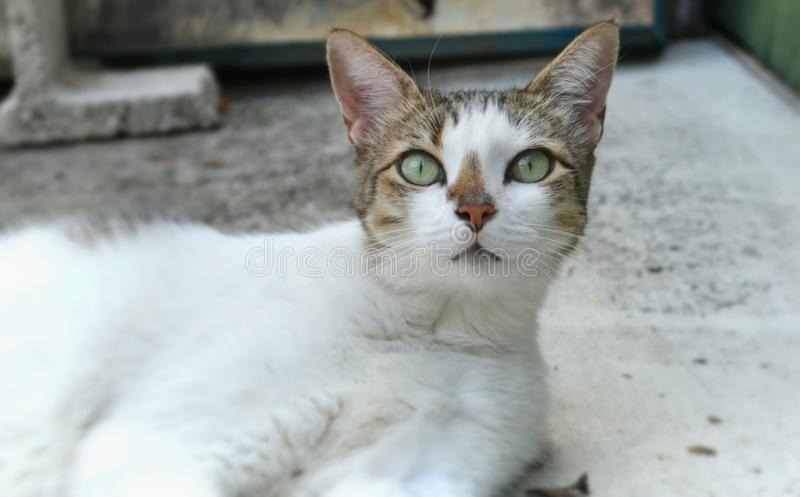 钥匙猫 免版税库存图片